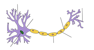 neuroneassone